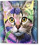 Pop Cat Acrylic Print