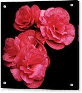 Pop Of Pink Acrylic Print