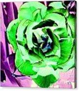 Pop Petals Acrylic Print