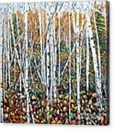 Poplar Art Acrylic Print