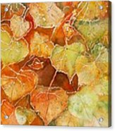 Poplar Leaves Acrylic Print