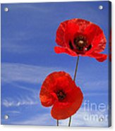 Poppies 02 Acrylic Print by Giorgio Darrigo