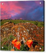 Poppies And Clouds Acrylic Print