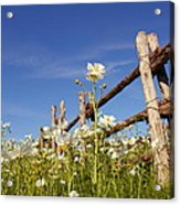 Poppies And Fence 2am-110209 Acrylic Print