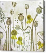 Poppies And Helenium Acrylic Print