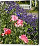 Poppies And Lavender Acrylic Print