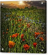 Poppies Art Acrylic Print