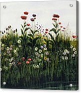 Poppies, Daisies And Thistles Acrylic Print