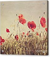 Poppies Acrylic Print by Diana Kraleva