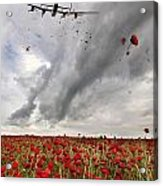 Poppies Dropped  Acrylic Print