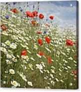 Poppies Et Al Iv Acrylic Print