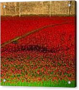 Poppies For The Fallen Acrylic Print by Andrew Lalchan