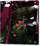 Poppies Growing Amongst Farm Machinery In A Farmyard Near Pocklington Yorkshire Wolds East Yorkshire Acrylic Print