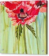 Poppies I Acrylic Print