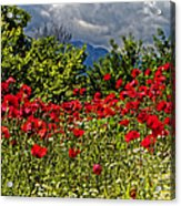 Poppies In Remembrance Acrylic Print