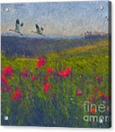 Poppies Of Tuscany Acrylic Print
