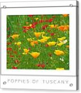 Poppies Of Tuscany Poster Acrylic Print