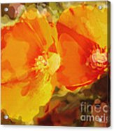 Poppies On Fire Acrylic Print by Artist and Photographer Laura Wrede
