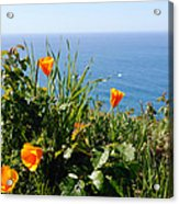 Poppies On The Pacific Acrylic Print