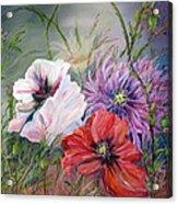 Poppies Passing Acrylic Print
