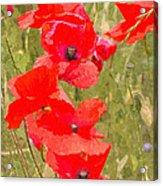 Poppies Vi Acrylic Print