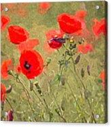 Poppies Viii Acrylic Print