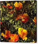 Poppies Will Make Them Sleep Acrylic Print