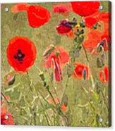 Poppies X Acrylic Print