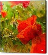 Poppin Poppies Acrylic Print