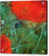 Poppy 30 Acrylic Print