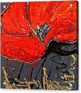 Poppy 43 Acrylic Print