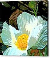 Poppy 5 Acrylic Print