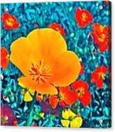 Poppy 7 Acrylic Print