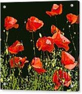 Poppy Art Acrylic Print