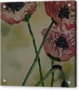 Poppy Breeze A Acrylic Print