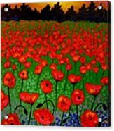 Poppy Carpet  Acrylic Print