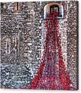 Poppy Cascade Acrylic Print