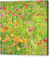 Poppy Confusion Painterly Textured Acrylic Print