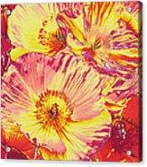 Poppy Extravaganza Acrylic Print
