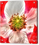 Poppy Flower Acrylic Print