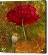 Poppy II Acrylic Print