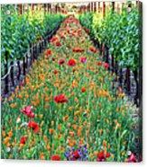 Poppy Lined Vineyard Acrylic Print