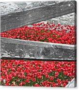 Poppy Memorial Tower Of London Acrylic Print