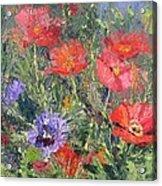 Poppy Parade Acrylic Print