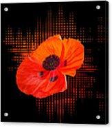 Poppy Passion Square Acrylic Print