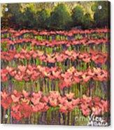 Poppy Romance Acrylic Print