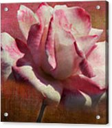 Poppy Rose Acrylic Print