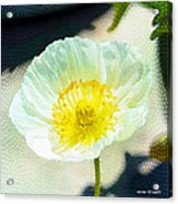 Poppy Series - Beside The Sidewalk Acrylic Print