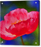 Poppy Series - Touch Acrylic Print