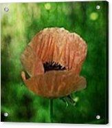 Poppy Acrylic Print